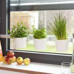 Küchendekoration  Küche